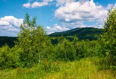 Beautiful summer landscape in mountains. Grassy meadow among the forest. bright blue sky with some clouds Stock Photography