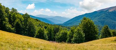 Beautiful summer landscape in mountains. Perfect countryside scenery with beech forest on a grassy hillside and mountain ridge in the distance Stock Photos