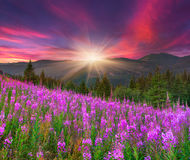 Beautiful summer landscape in the mountains royalty free stock photography