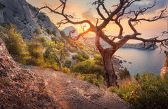 Beautiful summer landscape in mountains at sunrise Royalty Free Stock Photography