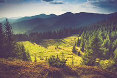 Beautiful summer landscape in the mountains. Beautiful summer landscape in the mountains at sunshine Royalty Free Stock Images