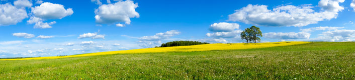 Beautiful summer landscape. Beautiful summer panoramic landscape of meadows with trees. Lithuania Stock Photos