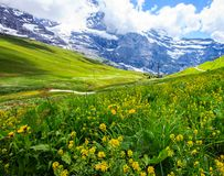 Beautiful summer landscape panoramic view of the yellow wildflower field with majestic colorful Swiss mountain ranges. And beautiful blue sky as a background Stock Photo