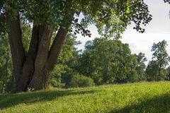 Beautiful summer landscape. In park in sunny day Stock Image