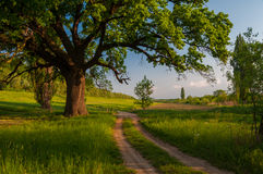 Old oak and country road Royalty Free Stock Images
