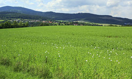 Beautiful summer landscape of suburb Prague Royalty Free Stock Images