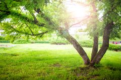 Beautiful summer landscape with a tree and sun rays in park. Tranquil background or wallpaper scenery with nature in park royalty free stock image
