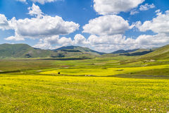 Beautiful summer landscape in Umbria, Italy Royalty Free Stock Photography