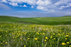 Free Beautiful Summer Landscape, Yellow Flower Field On The Hills Stock Photos - 155047513