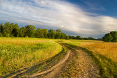 Beautiful summer meadow and earth road Royalty Free Stock Image