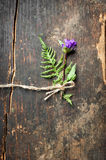 Beautiful summer meadow flower decoration on wooden background. Stock Photos