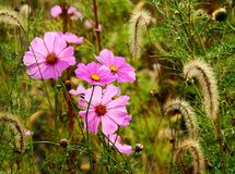 Beautiful meadow full of flowers Royalty Free Stock Photos