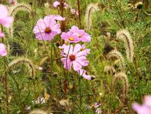 Beautiful meadow full of flowers Royalty Free Stock Photography