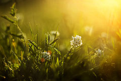 Beautiful summer meadow Royalty Free Stock Photo