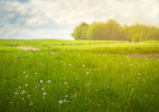 Beautiful summer meadow Stock Photo