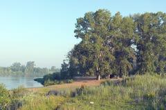 Beautiful summer morning landscape Stock Photos