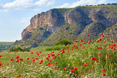 Beautiful summer mountain landscape with flowers . stock photography