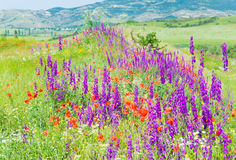 Beautiful summer mountain landscape with flowers . Royalty Free Stock Photos