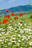 Beautiful summer mountain landscape with flowers . Stock Image