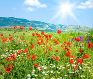 Beautiful summer mountain landscape with flowers . Stock Photos