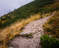 A beautiful summer mountain landscape in Tatry. A beautiful mountain landscape in Tatry, Slovakia royalty free stock image