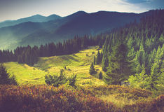Beautiful summer mountain landscape.Tourist tents near forest. Filtered image:cross processed vintage effect Royalty Free Stock Image