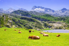 Beautiful summer mountains landscape with lake and pasture Stock Photos