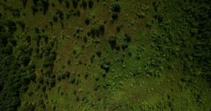 Beautiful summer nature aerial view. Beautiful field and bushes landscape aerial view on a summer day stock video