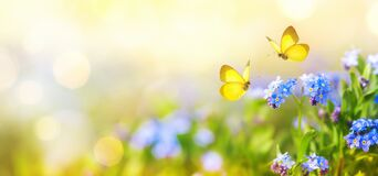 Free Beautiful Summer Or Spring Meadow With Blue Flowers Of Forget-me-nots And Two Flying Butterflies. Wild Nature Landscape Royalty Free Stock Photo - 182636005