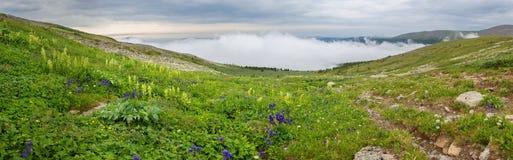 Beautiful summer panorama of the top of Altai Krai mountains. Beautiful summer panorama of the top of the Altai Krai mountains Royalty Free Stock Photos