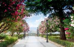 Beautiful summer park Royalty Free Stock Photos