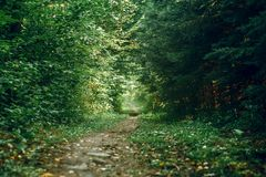 Beautiful summer park forest. Stock Images