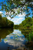 Beautiful summer park, river, reflection Royalty Free Stock Photo