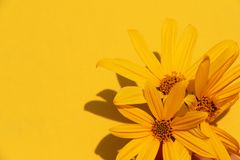 Beautiful summer photo plant sun yellow flower spring background stock images