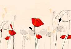 Beautiful summer poppies Royalty Free Stock Images