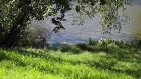 Beautiful summer river view. Picturesque view on the river, pier and green grass river bank in summer stock footage