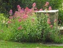 Beautiful wild meadow flowers on tall stalks Stock Photos