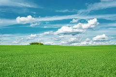 Beautiful summer rural landscape Royalty Free Stock Image