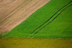 Beautiful summer rural landscape lines Royalty Free Stock Photo