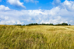 Beautiful summer rural landscape, Ukraine Royalty Free Stock Photography