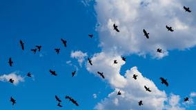 Cloudscape with a flock of flying black birds with spread wings royalty free stock image