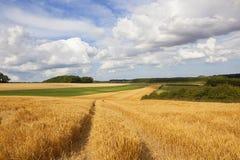 Beautiful summer sky over golden barley fields Royalty Free Stock Photos
