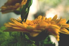 Beautiful summer specific photo. Yellow flowers in a close up shot. Beautiful details. Beautiful summer specific photo. Yellow flowers in a close up shot Royalty Free Stock Photography
