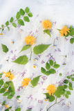 Beautiful summer/ spring background with fresh flowers and leaves on white table royalty free stock photo