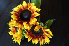 Beautiful summer sunflowers on brown background Royalty Free Stock Images