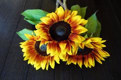 Beautiful summer sunflowers on brown background Stock Image