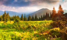 Beautiful summer sunrise in the mountains. royalty free stock image