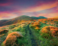 Beautiful summer sunrise in the mountains. Stock Photo