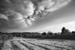 Beautiful Summer sunset landscape image of Ashdown Forest in Eng. Lish countryside black and white image Royalty Free Stock Images