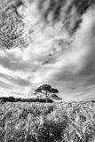 Stunning Summer sunset landscape image of Bratley View in New Fo. Beautiful Summer sunset landscape image of Bratley View in New Forest National Park England Stock Images